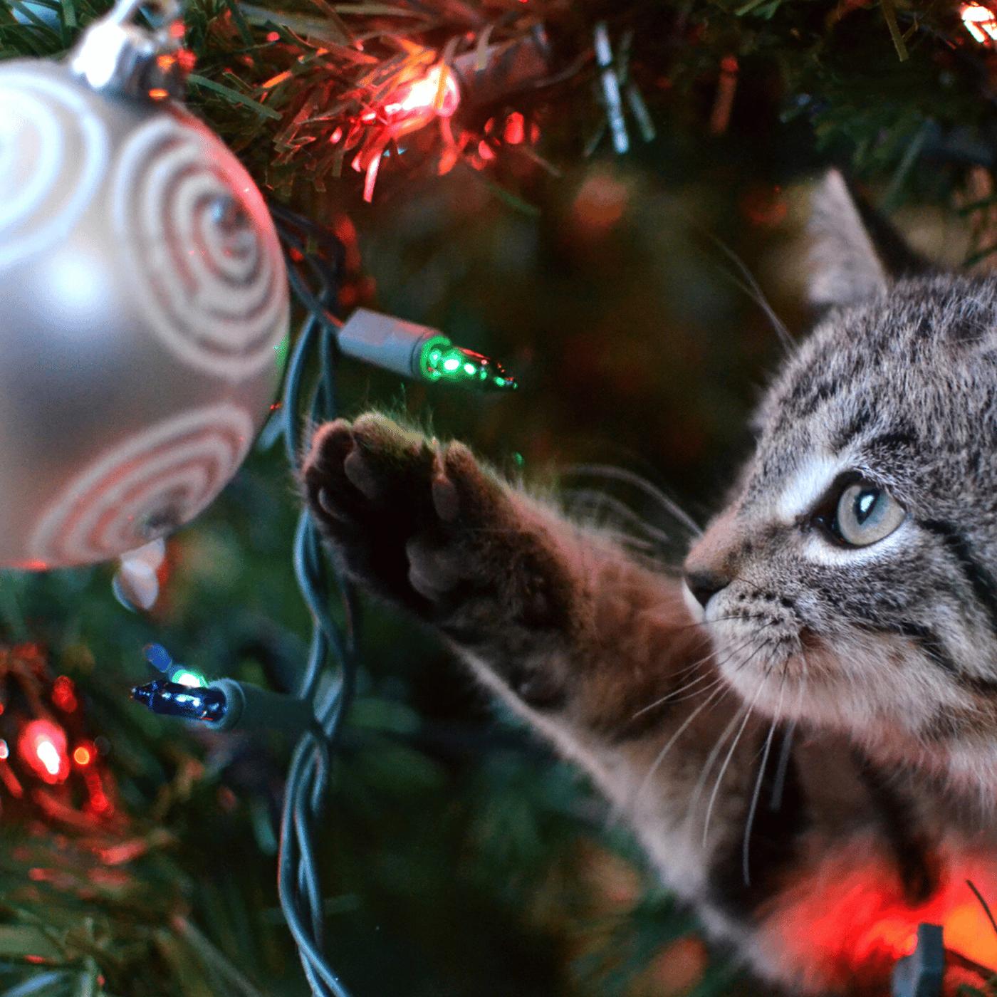 christmas hazards pets